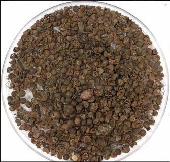 seeds1