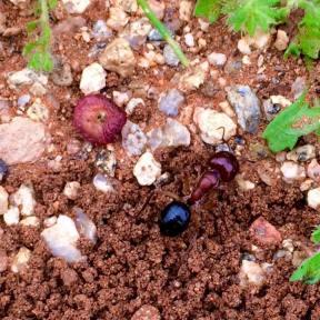 seeds11